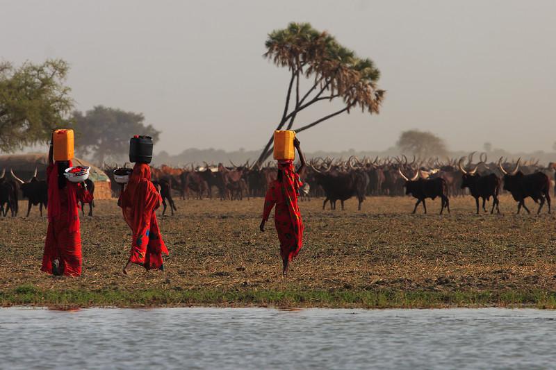 Choa nomads, Maga lake, Extreme-North, Cameroon.